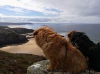 Hunde in der Bretagne