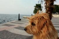 So zeige ich mich abends auf der Strandpromenade.