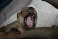 Gähnen ist so ansteckend.