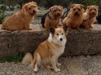 alle fünf Hunde